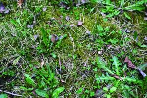 Elhanyagolt, elmohásodott fű tavasszal.