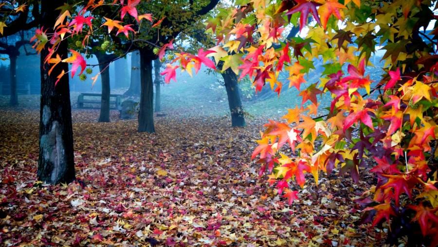 Miért ilyen sokszínű az ősz?