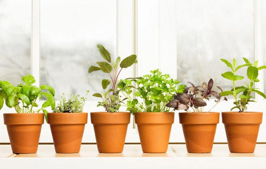10 fűszernövény, amelyeket a lakásban is sikerrel tarthatod!