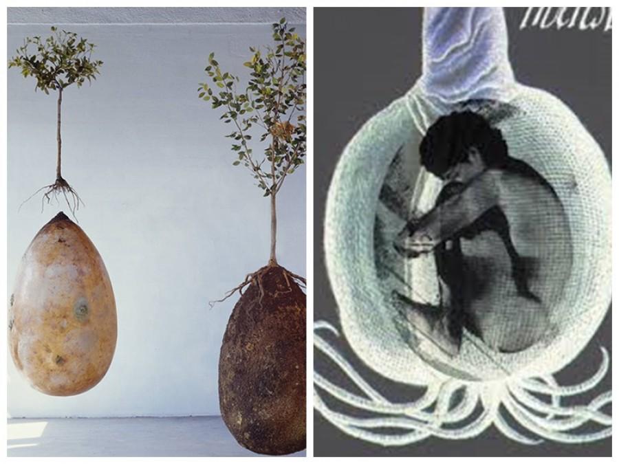 Akarsz a halálod után faként tovább élni? Íme a megoldás!
