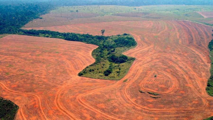 Egy év alatt egymillió futballpályányi erdőt vágtak ki Brazíliában!