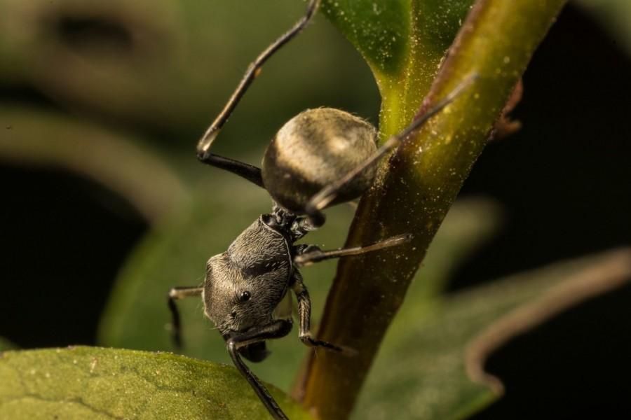 Gondoltad volna? Ez a pók is anyatejjel táplálja kicsinyeit!