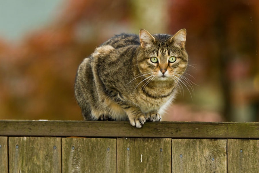 Meglőtte a macskát, felfüggesztett börtönt kapott