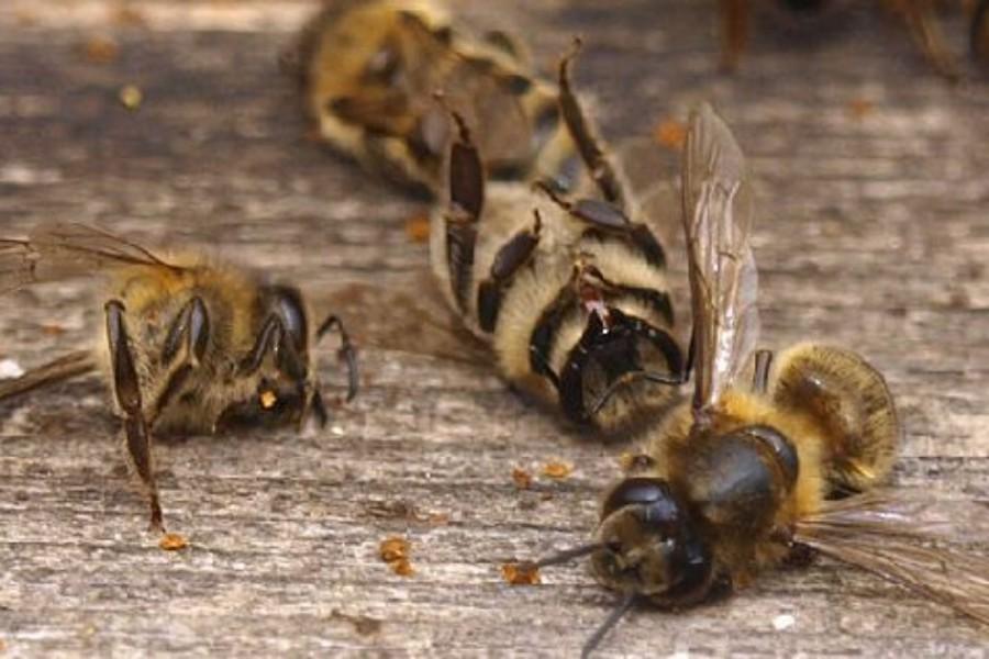 Méhek kezelésére szolgáló készítményt hívott vissza a Nébih