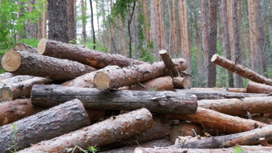 Alkotmánybírósághoz fordult az ombudsman az erdőtörvény módosítása miatt