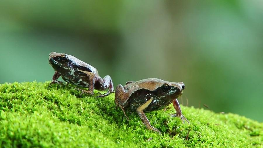 Három év kutatás után fedezték fel ezt az aprócska kis élőlényt!