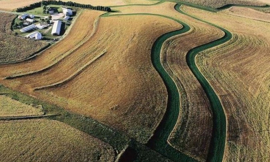 Mindössze négy növény foglalja el a világ mezőgazdasági területének 50%-át!