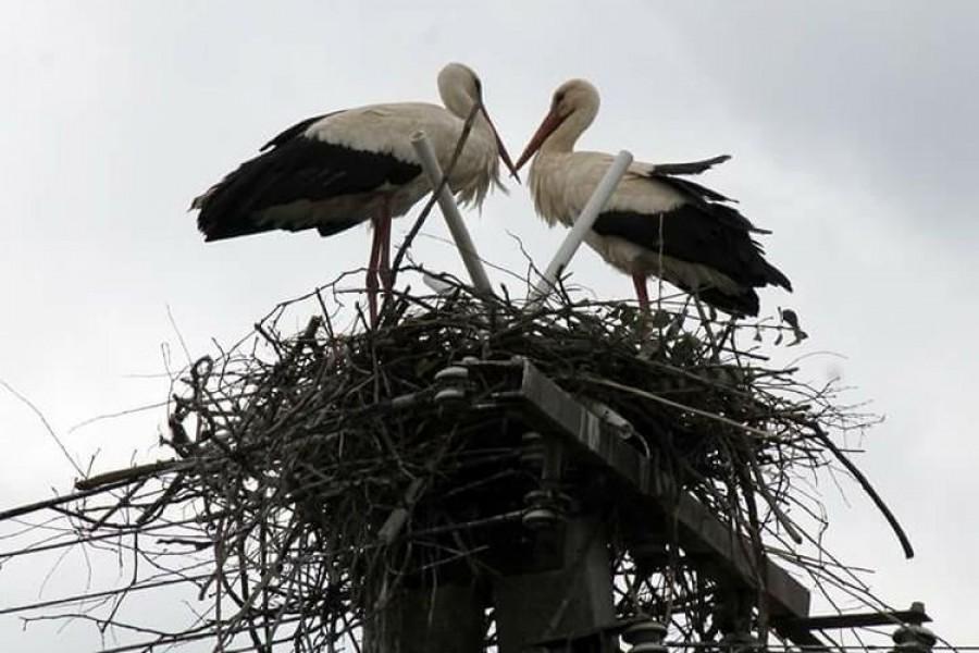 Karcsit és Klárát újra el akarják üldözni az otthonából.