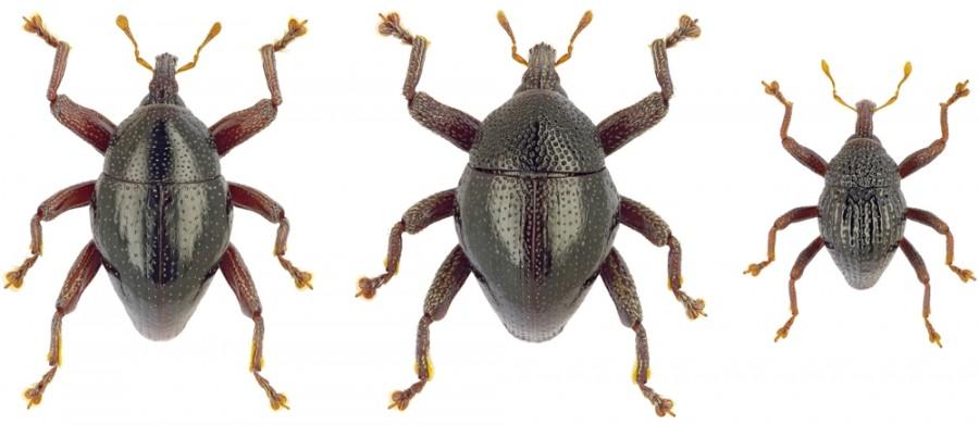 Több mint száz új rovarfajt fedeztek fel egy indonéz szigeten