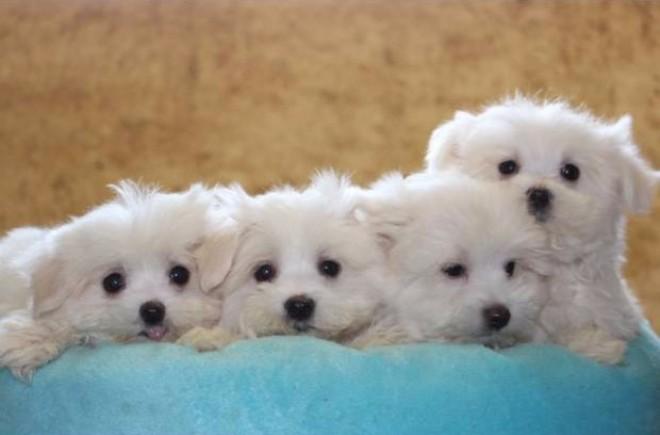 KUTYATARTÓK FIGYELMÉBE! Tudod, hogy mennyi idős a kutyád emberi életkorban számolva. NEM 7-EL KELL SZOROZNI!