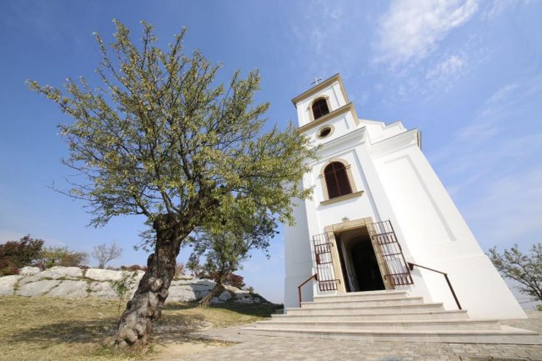 A pécsi havihegyi mandulafa lett az év európai fája