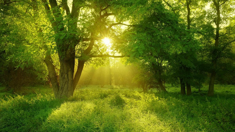 10 dolog, amiért imádjuk az erdőket!