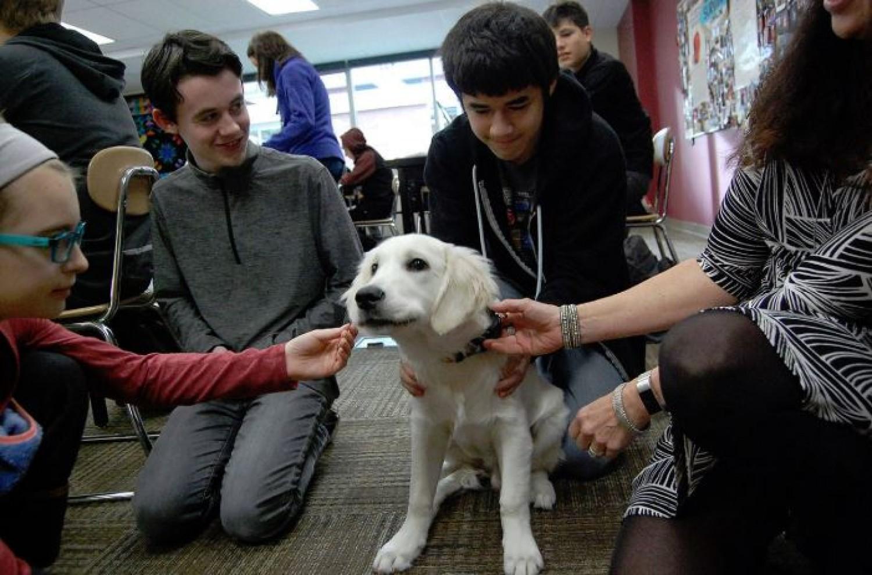 Érdekes felvetés: Kutyát minden iskolába!