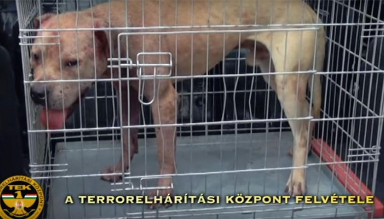 Tiltott állatviadal szervezői ellen emeltek vádat