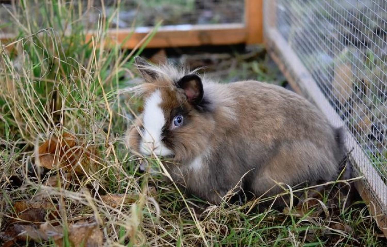 Az állatvédők kérése: ne ajándékozz élő állatot húsvétkor