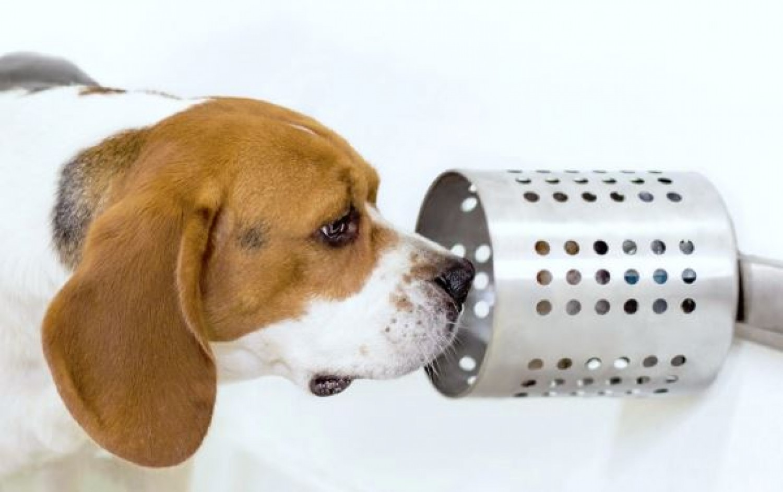 Kiszagolják a rákot -  a kutyák különleges képességére derült fény
