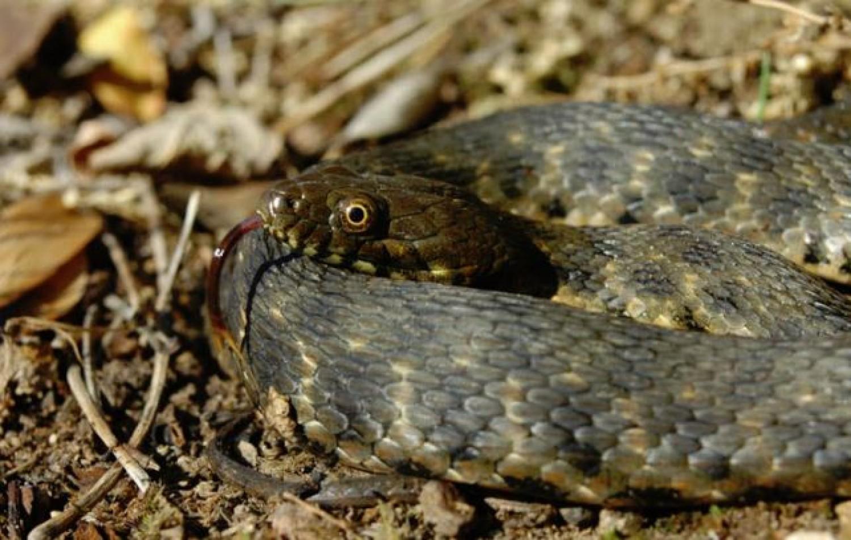 Pánik: kígyók lepték el a Fonyód környéki kerteket – Itt a figyelmeztetés!