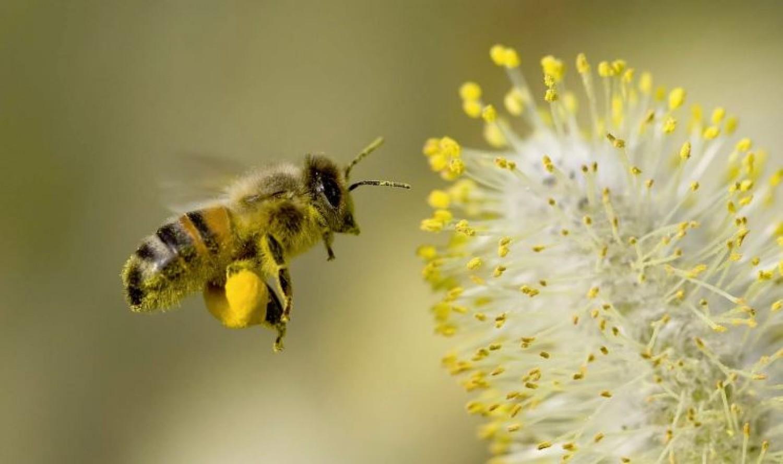 Óvjuk meg nélkülözhetetlen segítőinket, a méheket