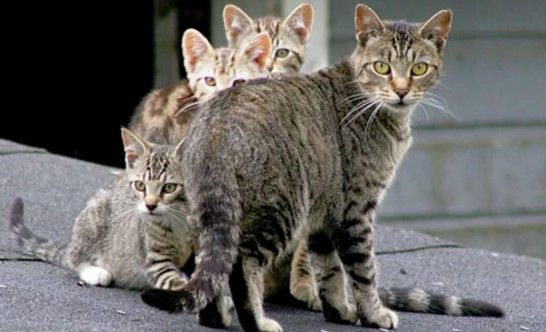 Mérgezett kolbásszal ölnének meg 2 millió kóbor macskát