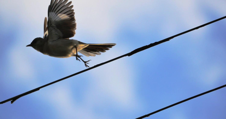 Közel 800 madár pusztult el egy év alatt áramütéstől