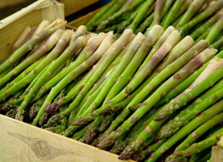 Egy zöldségféle, amit népiesen nyúlárnyéknak hívnak