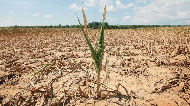Június 17. az Elsivatagosodás és Aszály Elleni Küzdelem világnapja