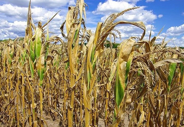 Tudod hányféle aszály létezik? Ma van az Elsivatagosodás és Aszály Elleni Küzdelem világnapja