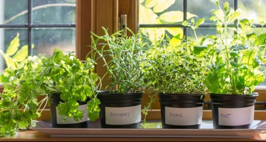 5 növény, aminek az illatát utálják a rovarok!