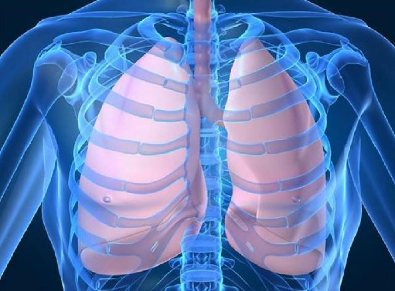 Meglepő tények a tüdőnkről