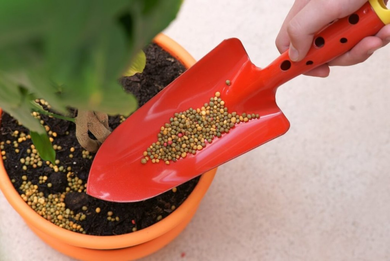 Így tápláld a szobanövényeket 1. rész