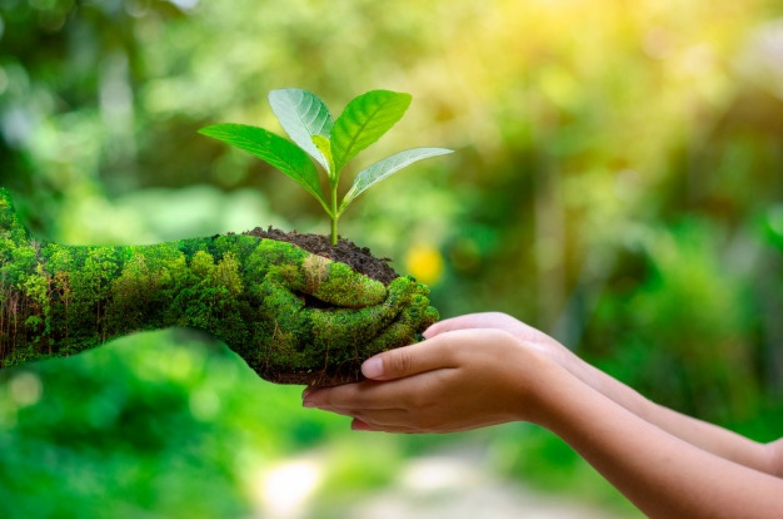 Növényi energiák - használjuk tudatosan a rezgéseket