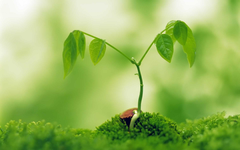Bioforce -  környezetbarát termékek online áruháza -