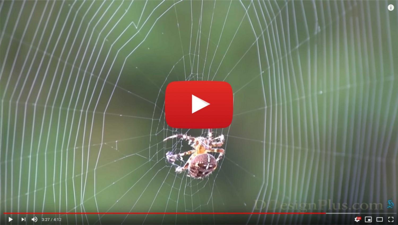 Így készül a pókháló! - Bámulatos videó!