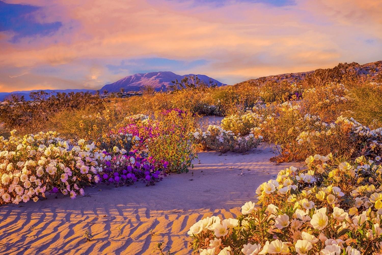 Nézegess képeket a virágzó sivatagról!