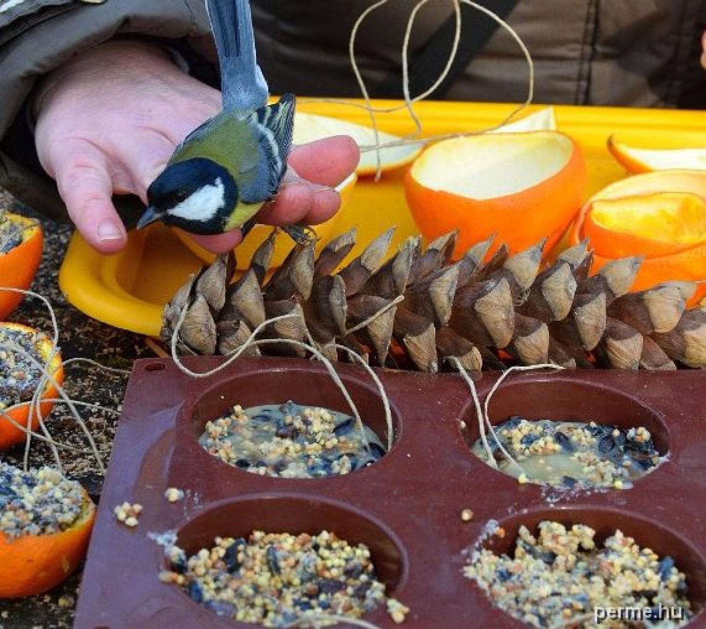 Téli madárkalács, aminek minden kertben és erkélyen ott a helye