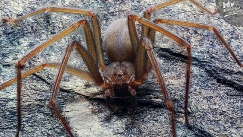 Új pókfajt fedeztek fel: csupán egyetlen csípésétől megrohad az emberi hús