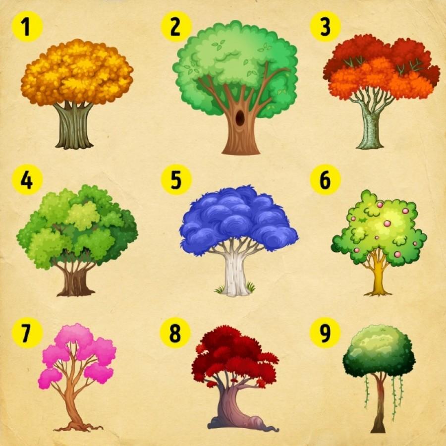 Válassz egy fát és tudd meg, mire van a legnagyobb szükséged!