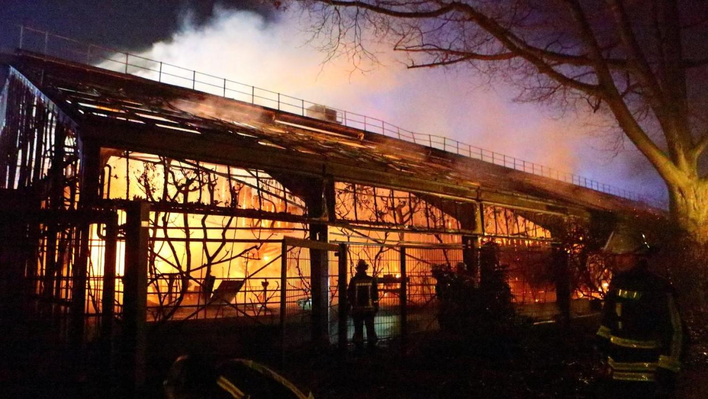 Tűzijáték miatt gyulladt ki a majomház - 30 állat pusztult el