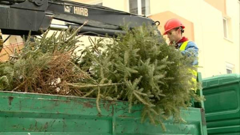Ne dobd a karácsonyfádat a kukába! - pár ötlet, hogyan hasznosítsd a kertedben