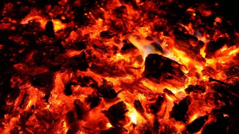 Több mint negyven tonna kidobott fenyőfát égetnek el a pécsi erőműben