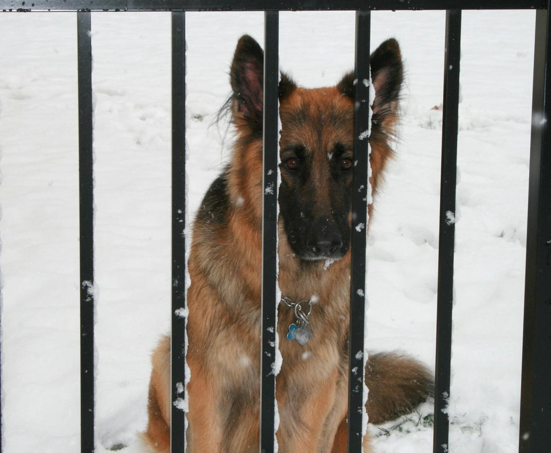 Állatkínzás miatt állítanak bíróság elé egy férfit