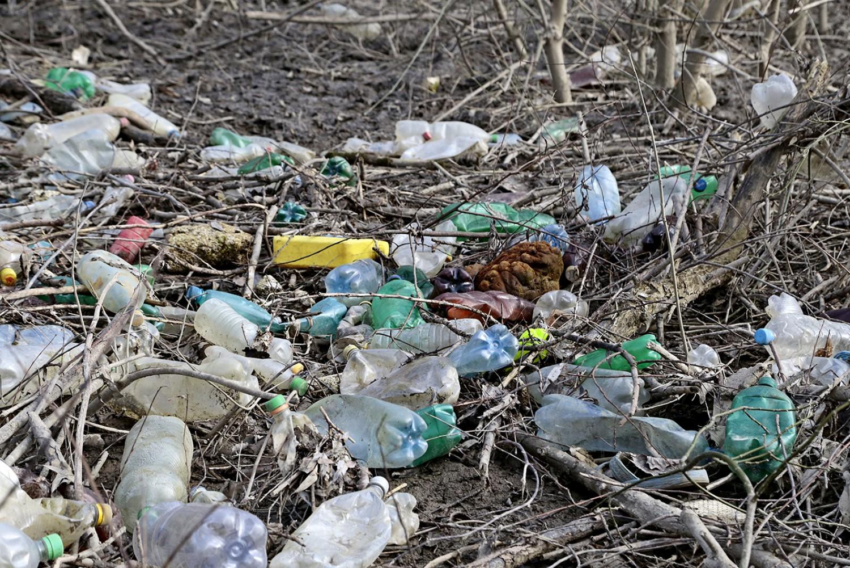 A magyar Tisza egyik legszennyezettebb, Natura 2000-es ártéri erdeje tisztul meg hétvégén a hulladéktól