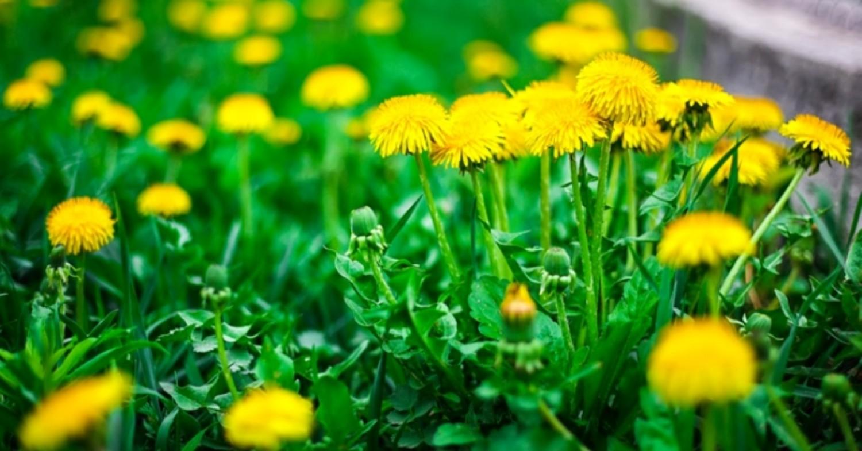 Egy igazi biokertben minden növény hasznos