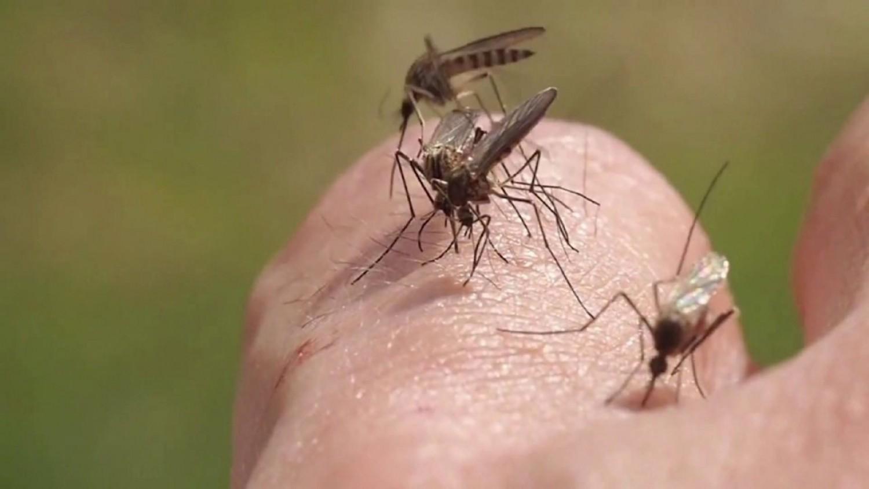 Elrendelték az első szúnyoggyérítést a Balatonnál