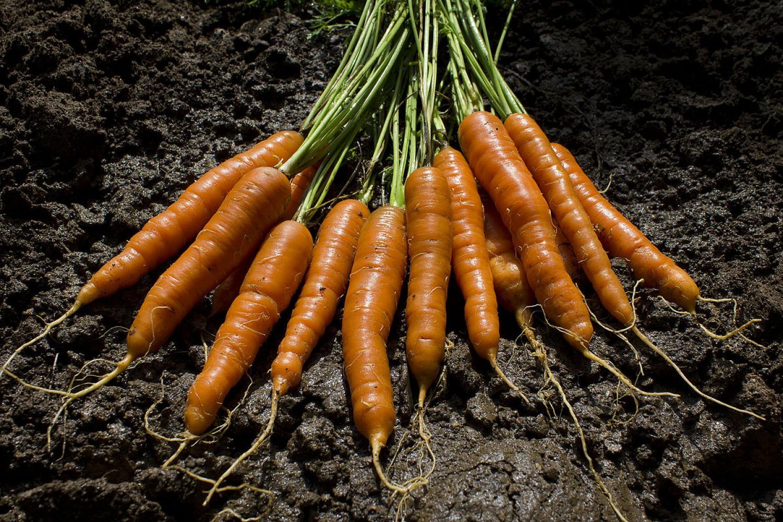 Sokkal kevesebb magból, sokkal több sárgarépa. Ráadásul egyelni sem kell!