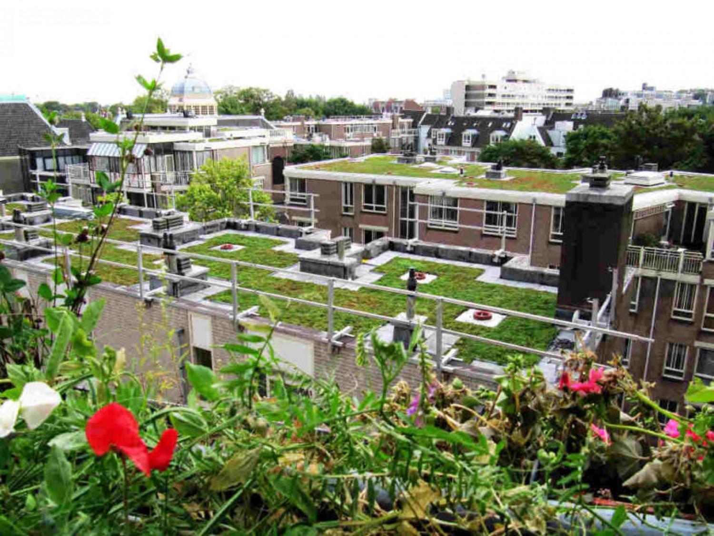 Példaértékű: Kizöldülnek az utrechti háztetők