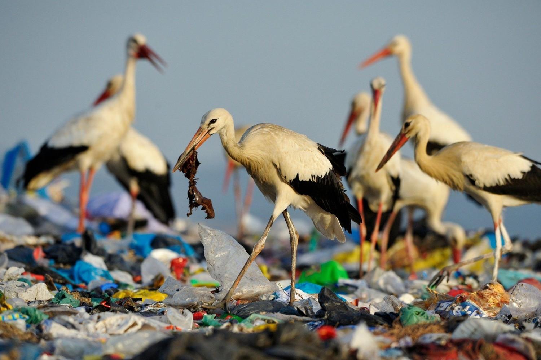 Kiszámolták, mekkora műanyagdarabot nyelhetnek le az állatok!