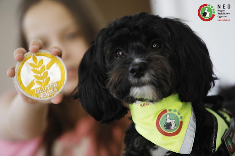 Szolgálatba állt az első magyar gluténjelző kutya