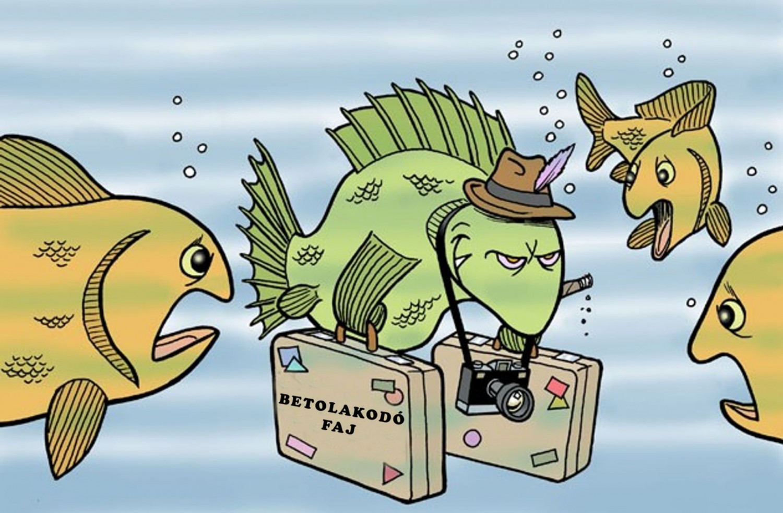 A betolakodó fajok fenyegetést jelentenek a védett területekre