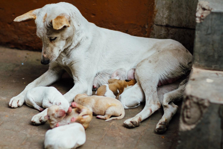 Az ivartalanítást tartják a legkevésbé fontosnak a magyarországi kutyatartók